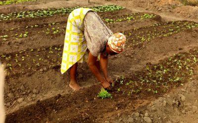 L'agriculture urbaine au Bénin