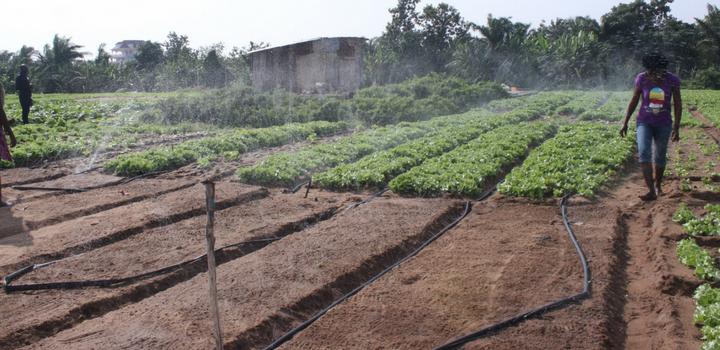 Développement de deux jardins communautaires pilotes dans deux villes du Bénin